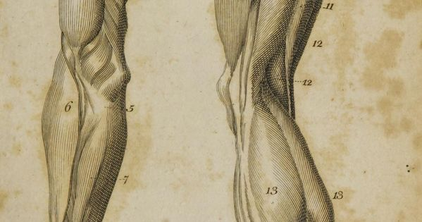 First published under the title 'Anatomy of the humane body' in London
