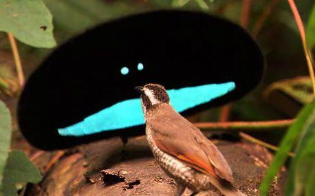 Birds Of Paradise Birds Of Paradise Animals Birds