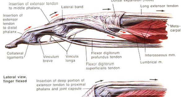Anatomy study tools