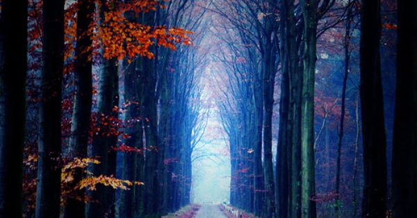 Light at the end of the (tree) tunnel. . .