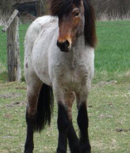 Pin Von Alejandra Auf Animales In 2020 Schone Pferde Pferde