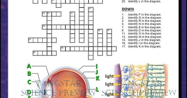 Eye    Crossword with    Diagram     Editable    Student learning