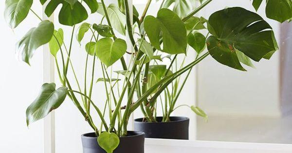 6 id es d co pour sublimer vos plantes autrement les plantes tabouret et plantes. Black Bedroom Furniture Sets. Home Design Ideas