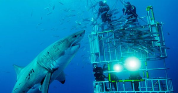 Bucketlist: Cage diving with great whites!