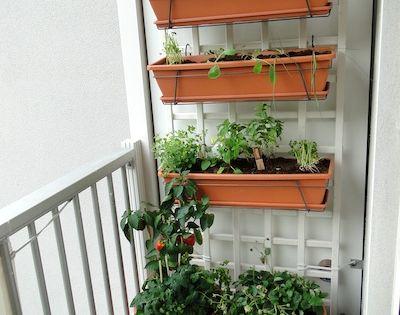 Et Voici Mon Potager De Balcon Vertical Am Nagement De Balcon Pinterest Jardins Jardins