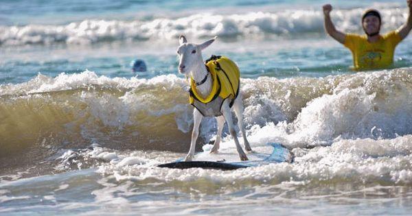 Goat herder dana mcgregor loved surfing so much that he just assumed