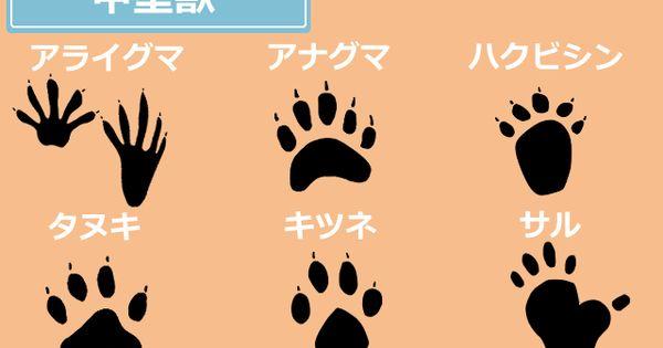 動物の足跡写真を種類ごとにわかりやすく解説 正体判別に役立てよう アライグマ イタチ捕獲 屋根裏ハクビシン駆除対策撃退 害獣駆除110番 動物の足跡 アライグマ 足跡