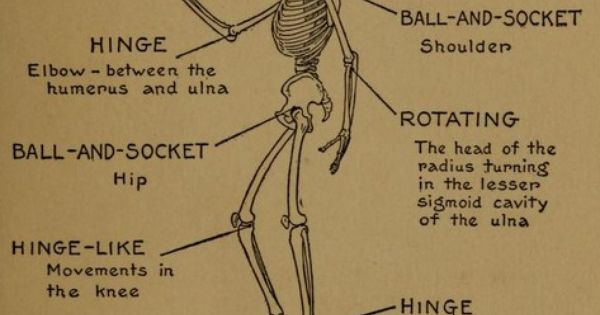 Anatomy illustrations public domain