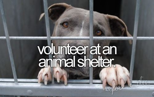 Volunteer at an animal shelter; hoping to do it this summer :)