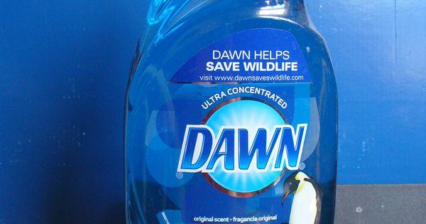 Boxelder Bugs killer, Dawn dish soap.