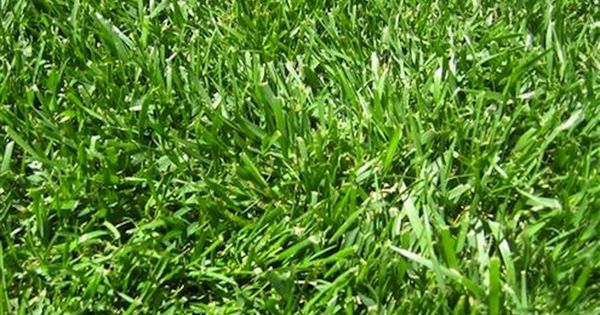 Keep Off The Grass 5 Alternatives To A Traditional Lawn Grass Alternative Zoysia Grass Lawn Garden