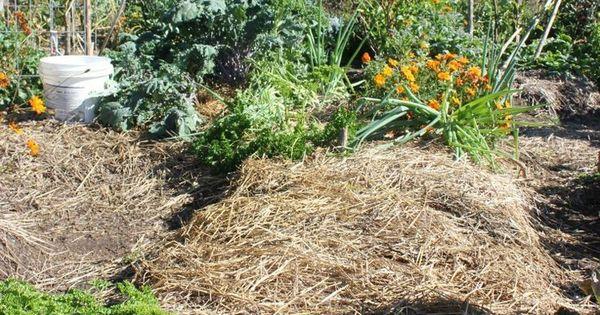 Preparing your garden for winter homesteads honey and gardens - Prepare garden winter ...
