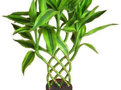 Plantas de interior que no necesitan mucha luz plantas for Plantas de interior que no necesitan luz