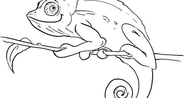 Chameleon Coloring Pages  Free Printables  Chameleons