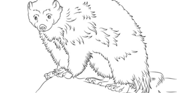Cute Wolverine Coloring Page Wolverine Animal Animal Coloring Pages Coloring Pages