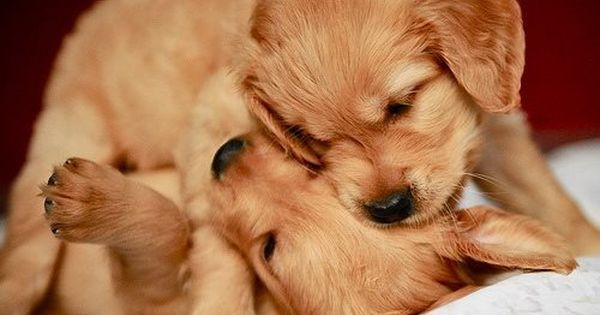 Looks Like Roxy And Her Litter Mate Baby Animals Cute Puppies Animals