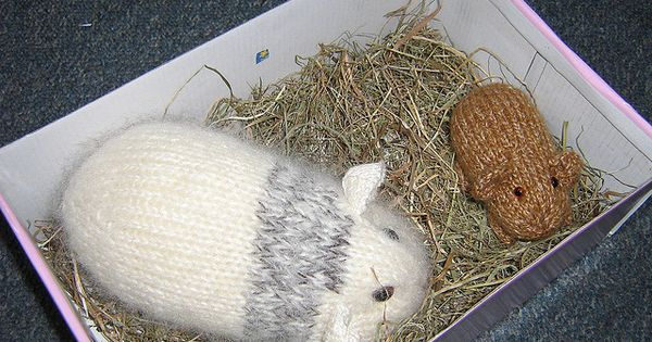 Guinea Pig Toy Knitting Pattern : guinea pig pattern Knitting Pinterest Patterns, Knitting patterns and Toy
