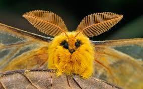Bildergebnis Fur Moth Seltsame Tiere Verruckte Tiere Exotische Tiere