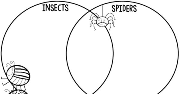 insects vs  spiders  venn diagram freebie   from o
