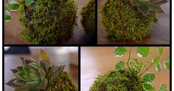Jardin suspendu# boule de mousse# Moss ball#  Garden  Pinterest ...