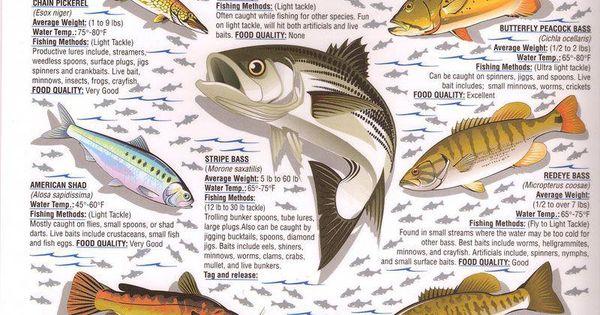 Pin By Fishing Buddyzz On Outdoor Fishing Fish Trout Fishing Fishing Outfits