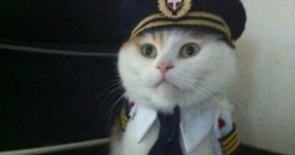 Aye Aye Captain! captaincat