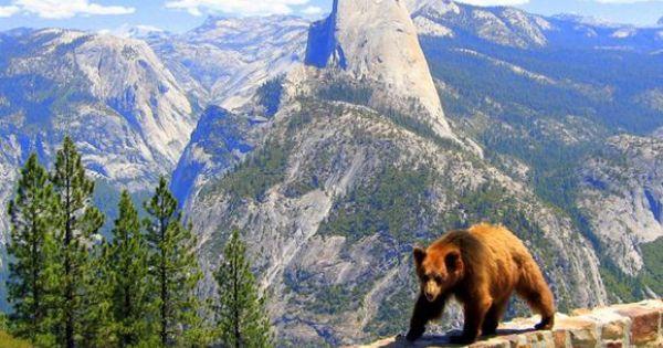 Yosemite National Park Animals Yosemite Pinterest