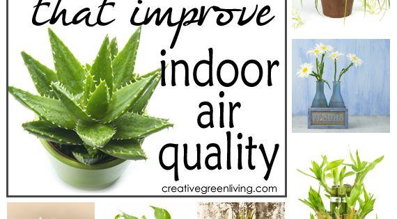 15 plants that improve indoor air quality plants for Best plants to improve air quality