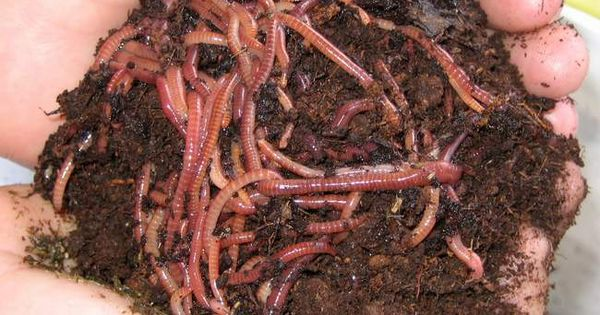 A complete manual on vermicomposting and vermiculture for Everything about soil