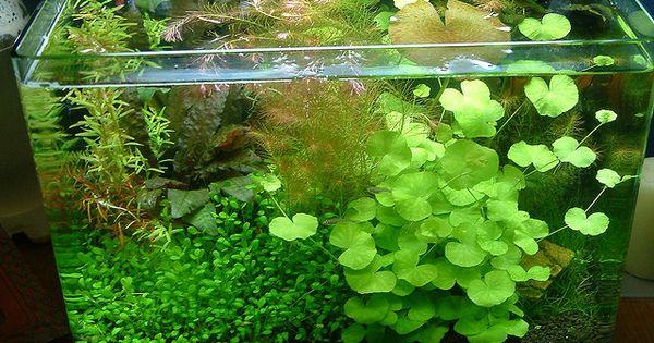 6 Gallon Nano There Is No Space For Fish Aquatic Inspiration Pinterest Aquariums Fish