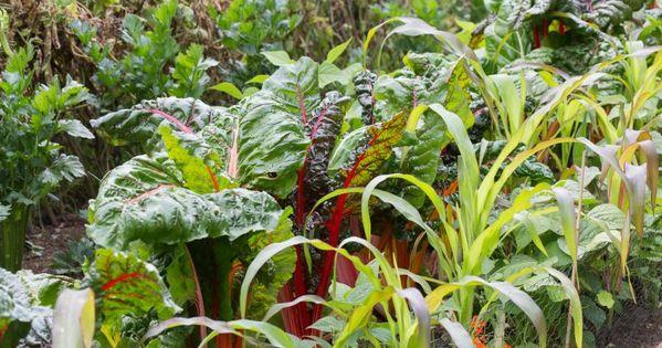 Anbauplan Fur Gemuse Gute Pflanzkombinationen Auch Fur Das Hochbeet Pflanzen Gemuseanbau Anbau
