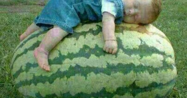 نوم العافيه Heirloom Vegetables Watermelon Fruit Plants