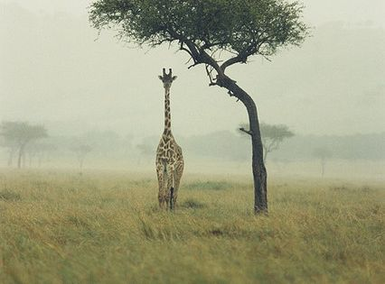 Giraffe cute baby Animals Baby Animals| http://industrial-design-6779.blogspot.com