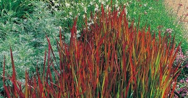 Decorative grasses for landscaping garden landscaping for Coloured ornamental grasses
