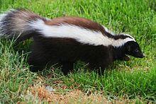b0269eff642f207dea728249a39e3a06 - How To Get Rid Of Raccoons In My Crawl Space