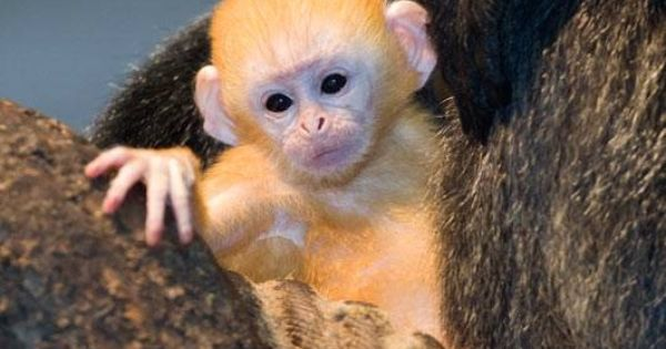 Angry Animals Google Search: Cute Baby Animals - Google Search