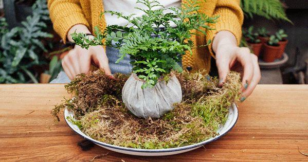 how to make a kokedama diy 39 string garden 39 tutorial piante piante da interno e giardinaggio. Black Bedroom Furniture Sets. Home Design Ideas