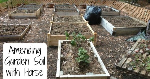 Amending Garden Soil With Horse Manure Horse Manure And