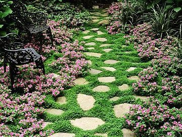 Dichondra Repens No Mow Lawn 100 Seeds Full Sun Perfect Ground Cover For Warm Climates Zones 9 To 11 Containe Landscaping Tips Ground Cover Garden Walkway