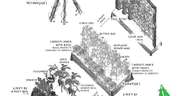 Basic veggie garden design with vertical growth