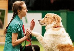 Crufts And Scruffts 2019 Puppy Day Dog Agility Four Legged