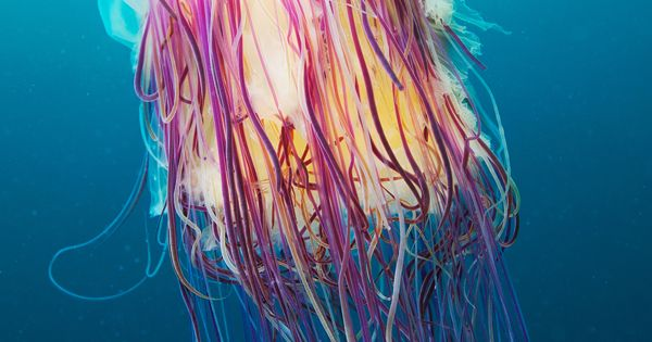 weandthecolor: Stunning underwater photography Jellyfish by Alexander Semenov.
