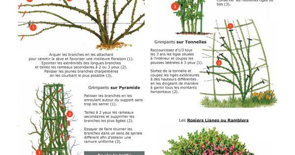 La taille des rosiers grimpants lianes et ramblers jardinage pinterest taille des rosiers - Periode de taille des rosiers ...