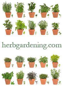 Herb Gardening Information At Herbgardening Com Great Resource