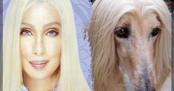 Celebrities And Their Look Alike Dogs Pet360 Pet Parenting Simplified Like Animals Celebrities Look Alike