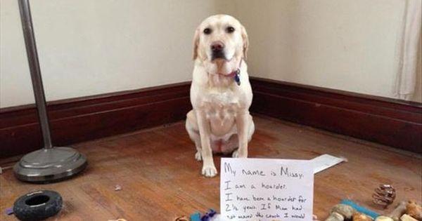Dog Shame My name is Missy. I am a hoarder. I have