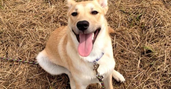 Bibi Mischling Pawshake Dogs Animal Rescue Animals