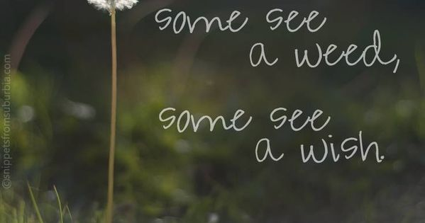 Some see a weed, some see a wish. perspective quotes wisdom