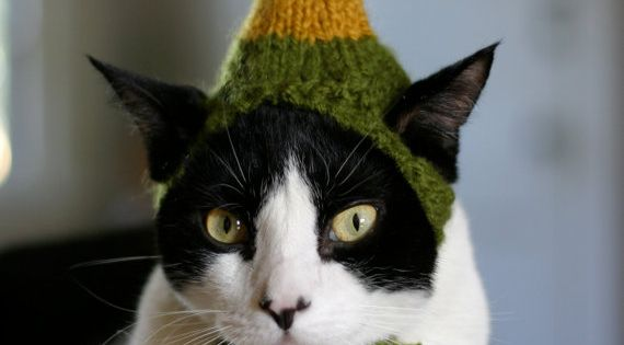 Buddy the Elf Cat Hat - hahahahaha oh my word, i'm laughing