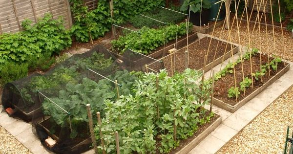 vegetable Garden layout - for small spaces  Home  Pinterest  채소 가든, 조경 ...